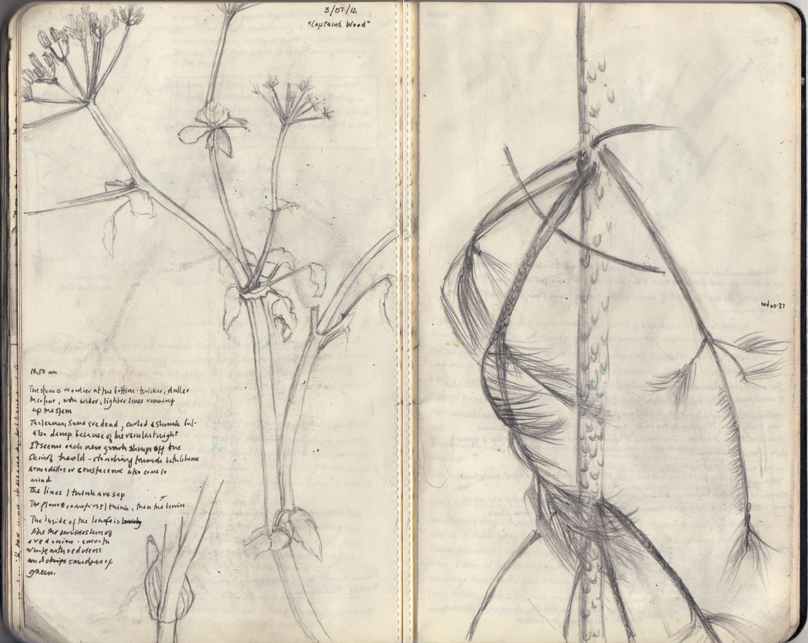 sketchbook_stalks